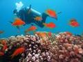 沖縄のダイビングスポットおすすめTOP17!ライセンス取得や体験ツアー情報も