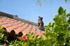 沖縄の観光スポット絶対おすすめ43選!人気の名所や隠れた穴場も
