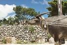 沖縄のアクティビティおすすめ21選!人気の格安体験ツアーも