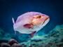 沖縄の魚が美味しい料理店11選!市場や居酒屋でグルクンやミーバイを食す