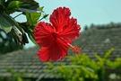 沖縄女子旅におすすめのホテルやグルメ・観光スポット27選!離島や穴場も♡