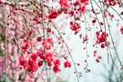 大阪の花見スポットおすすめ21選!桜の名所や穴場の見頃時期は?