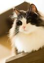 大阪のおすすめ猫カフェ15選!人気の有名店から穴場までご紹介