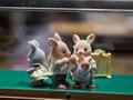 神奈川で人気の動物園ランキング!大人も子供も楽しめるおすすめの場所は?