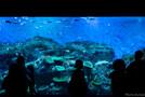 今話題のアクアワールド茨城県大洗水族館!人気の秘訣や見どころをご紹介