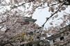 唐津神社の見どころは?御朱印や唐津くんちについてもご紹介!