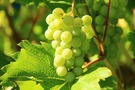 岡山のおすすめ絶品フルーツパフェ11選!名産の果物をたっぷり味わえるお店は?