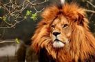 茨城のおすすめ動物園ランキング!子供に人気のスポットをご紹介