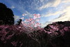 笠間観光のおすすめスポットランキングTOP21!陶芸や神社巡りの旅もご紹介