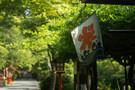 つくばのかき氷がおいしいお店!茶の木村園など人気店を徹底紹介!