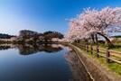 山梨は桜の名所がいっぱい!祭りやライトアップの情報をチェック
