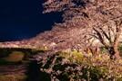 東京の夜桜スポットを徹底紹介!名所からデートにおすすめの穴場まで