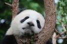 東京都内・近郊の動物園でデートはいかが?動物とのふれあいができる施設も!