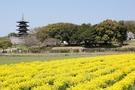岡山県の「道の駅」ランキングTOP11!人気の温泉施設や車中泊情報も!