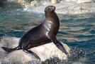 高知の桂浜水族館で癒されたい!飼育員と動物たちの愛を刮目せよ