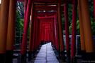 東京で御朱印巡りはいかが?かわいい&人気の限定デザインもご紹介!