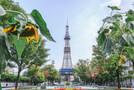 札幌のおすすめ公園13選!子どもも喜ぶ四季の自然を満喫できる場所は?