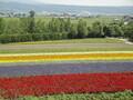 北海道の花を巡る人気観光名所25選!最高に美しい見ごろのシーズンは?