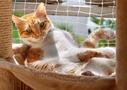 札幌の可愛い猫カフェおすすめは?料金や人気イベント情報もご紹介