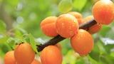 伊豆フルーツパークが楽しい!いちご・メロンの果物狩りや名物お土産に食事も絶品