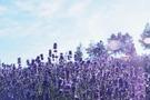 富良野のおすすめグルメスポット23選!人気のランチや穴場もご紹介