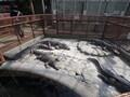 伊豆「熱川」の人気観光スポット21選!海・温泉・グルメ・お土産など情報満載