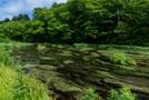 「八戸 こどもの国」は自然の中にある遊園地!楽しい人気のアトラクションが満載