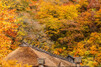 十和田湖の紅葉が楽しめる絶景スポットをご紹介!おすすめの名所や見頃の時期は?