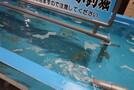 函館の名物「イカ釣り」に挑戦!その場で食べられるおすすめの体験とは?