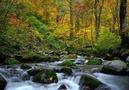 世界遺産・白神山地観光の見どころをご紹介!おすすめの散策コースもチェック