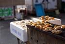 青森の絶品ホタテを贅沢に味わう!新鮮で美味しい料理が楽しめる専門店をご紹介