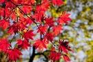 秋の那須は紅葉の見所がいっぱい!滝・ロープウェイ・吊り橋など名所スポット紹介