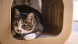 広島でおすすめの猫カフェ15選!人気店バロンやまねき猫もご紹介