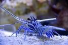 宮島水族館での楽しみ方を大特集!癒やし効果のスナメリや人気のお土産も