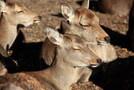 奈良公園で鹿と遊ぶ際の注意点!鹿せんべいのあげ方やしてはいけないことは?