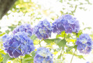 伊豆「下田公園」の見どころを徹底紹介!人気のあじさい祭りと展望台からの絶景も