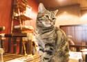 仙台の猫カフェならおすすめはココ!人気の癒される空間でまったり