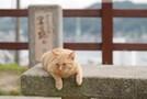 尾道市でおすすめ観光スポット29選!人気の名所から猫に会える場所まで