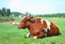小布施牧場の楽しみ方!ミルグリーンのジェラートなどおすすめは?