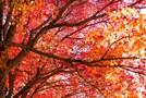 蔵王の紅葉・おすすめ絶景ポイント9選!名所や見ごろの時期をご紹介