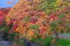 おしゃれな街・福岡県うきはをゆっくり観光しよう!人気のおすすめスポットは?