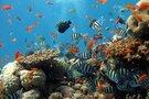 新潟で大人気の水族館「マリンピア日本海」徹底解説!おすすめの見どころは?