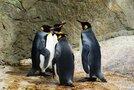 姫路市立水族館の楽しみ方を徹底解説!ペンギンに会えるスポットやタッチプールも