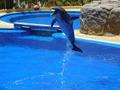 リニューアルした新潟の水族館・マリンピア日本海へ!料金や人気のお土産は?