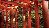 新潟の弥彦神社はおすすめのパワースポット!大自然での参拝・そのご利益とは?
