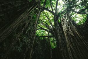 うわさ 話 の 沖縄