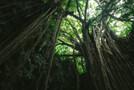 実は奇妙な話が多い「沖縄のうわさ」まとめ!ユタやスリーエスカーブの真相は?