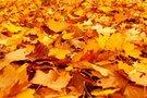 滋賀で紅葉が綺麗な絶景スポット19選!琵琶湖周辺の名所や穴場も