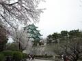 名古屋城は桜の名所!おすすめの花見スポットや「桜まつり」の情報をご紹介
