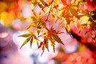 奈良の秋と言えば紅葉!見頃やおすすめコース・穴場を教えます